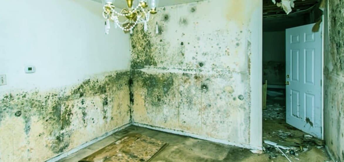 Mold Remove